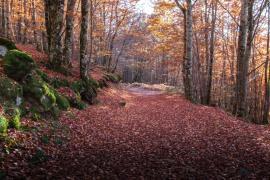 L'automne dans le Caroux