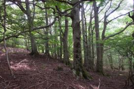 Gestion du domaine forestier du temple Zen Yujo Nyusanji
