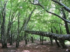 Fundraising campaign for the forest maintenance plan