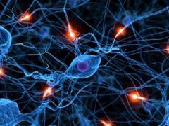 Meditar desarrollaría el cerebro