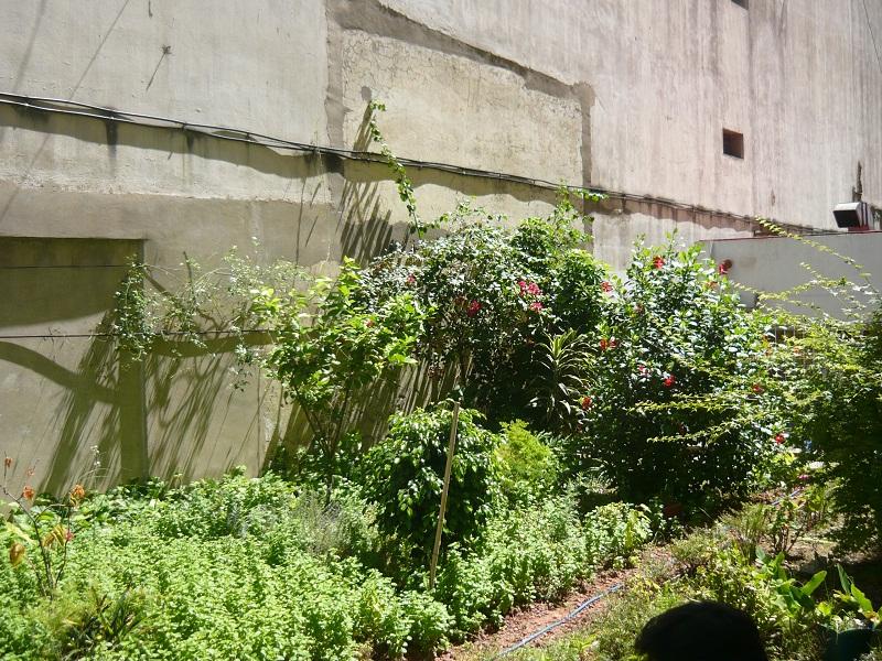Dojo Caballito - jardin 2