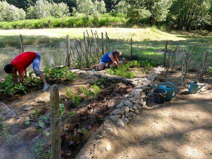 Samu pendant le camp d'été, Ango : le jardin.