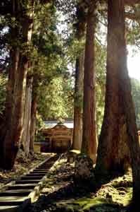 Bosque y escaleras del Templo Zen Eihei